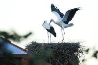 Опит за летене; comments:4