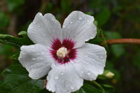 no name ( ID=2376887 ); comments:2