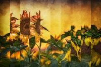 Golden Sky Segments; comments:11