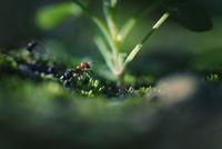 Макро истории в гората; comments:11