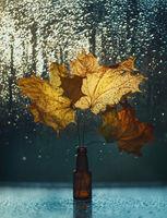 ...есенно...; comments:11
