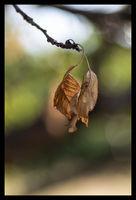 autumn sets..; comments:2