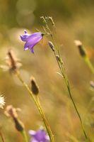 полски цветя; comments:3