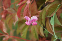 no name ( ID=2379742 ); comments:3