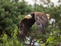 Орел в полет; comments:7