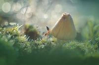 Макро истории и приказки от гората; comments:8