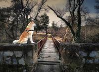 Мостът на Акитите !; Коментари:2