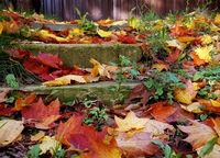 есен; comments:2