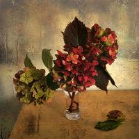 Есенни хортензии 3; comments:36