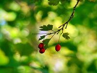 Вече е есен... :); comments:12