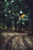 Дъбова гора; comments:1