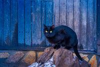 Blue Meow; comments:8