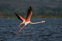 Розово Фламинго...; comments:14