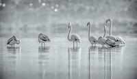 фламинги; comments:18