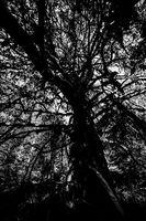 Дървото на живота; No comments