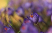 no name ( ID=2383596 ); comments:5