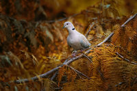 no name ( ID=2383716 ); comments:5