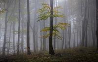 Autumn; comments:7