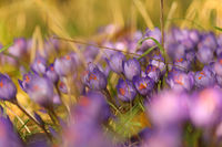 no name ( ID=2383866 ); comments:6