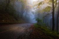 Магията на есента; comments:18