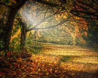 Есенно; comments:8