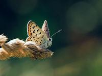 Пеперудени поздрави от лятото; comments:9