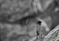 Дъжд и слънце над рошльо; comments:25