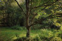 Просто едно дърво; comments:4