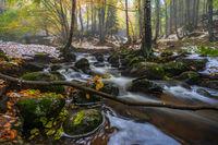 Есен на Витоша; comments:10