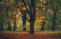 Есенни дървета; comments:12