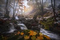 Цветове и сезони; comments:19