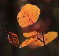 Извънземното от есента; comments:3