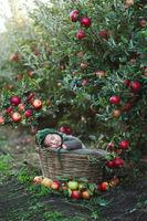 Ема в ябълковата градина; comments:5