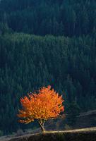 Сигнално есенно; comments:15