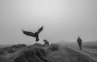 Мъгливи друмища; comments:3
