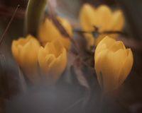 Скрили в шепите есенно настроение...; comments:8