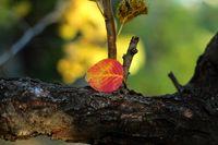 ......сезонът не е тъжен ......чу ли.....а просто е тих и е есен.....; comments:1