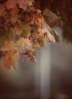 Задрямало, есенно...; comments:6