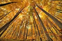 златната есен; No comments
