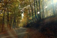 Отива си лятото, идва есента, тръгвам някъде и себе си искам да разбера...; comments:5