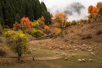 Есен в Родопите; comments:9