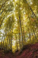 Краят на октомври в Странджа планина; comments:2