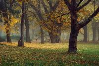 Есенна сутрин; comments:8