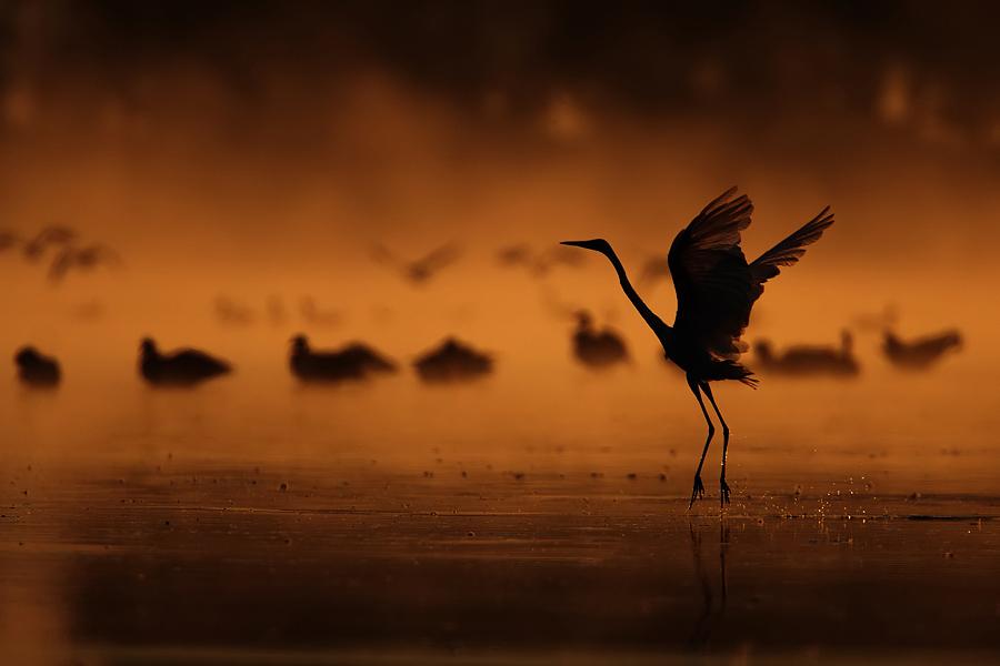 dancing in the fog от Marcin - mnawrocki