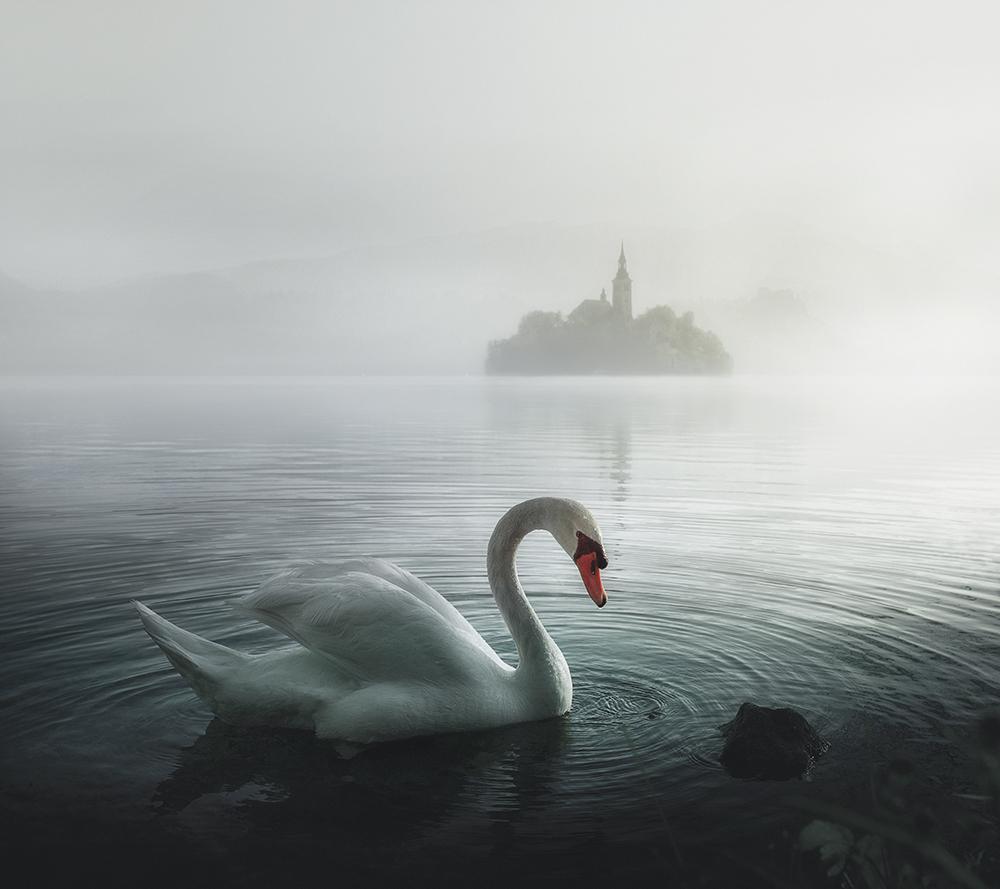 Лебедово езеро :)) от Веселин Атанасов - swqaz