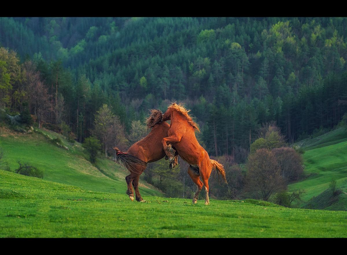 Танц от Александър Иванов - masteral
