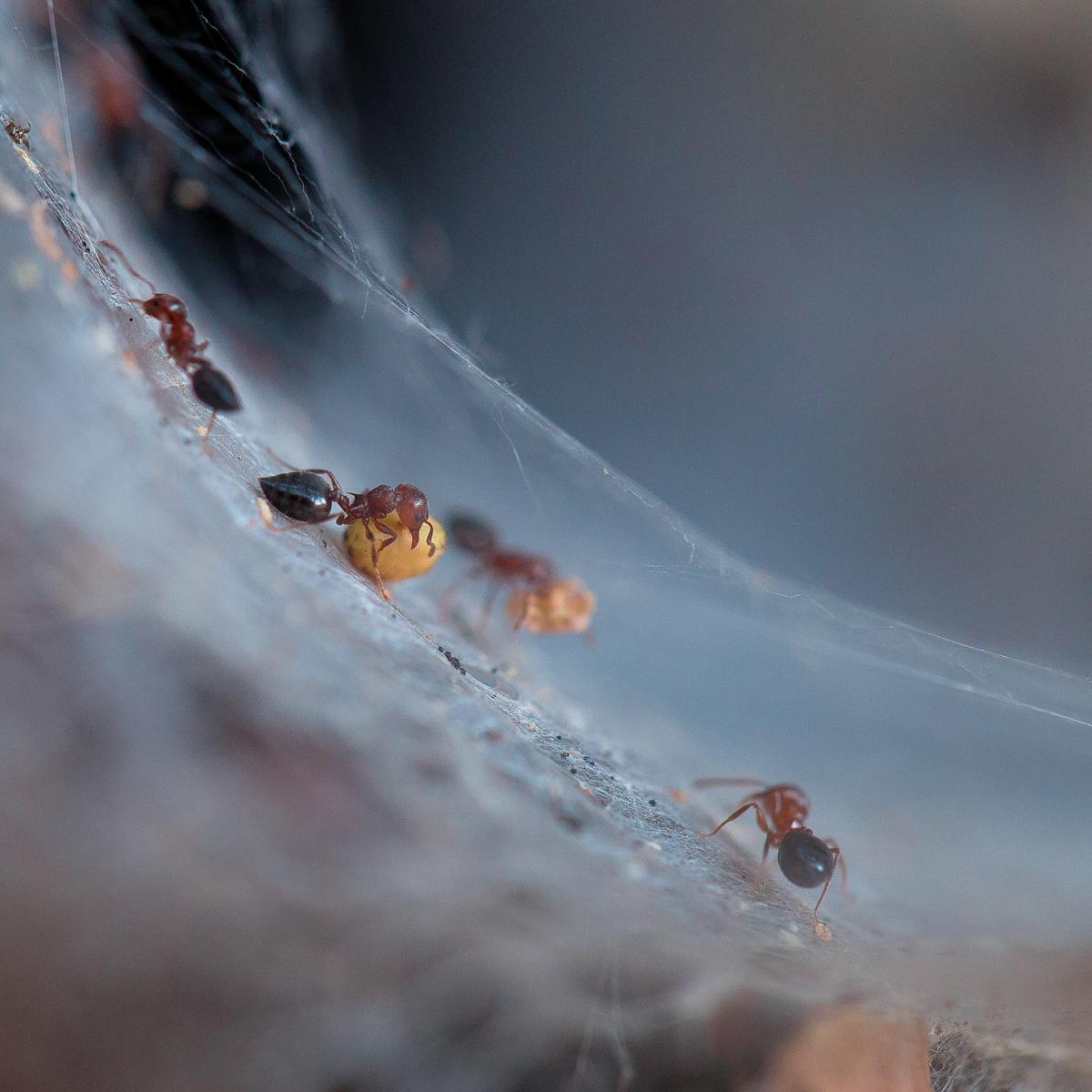 Мравки работнички от Георги Йорданов Георгиев - zeromx