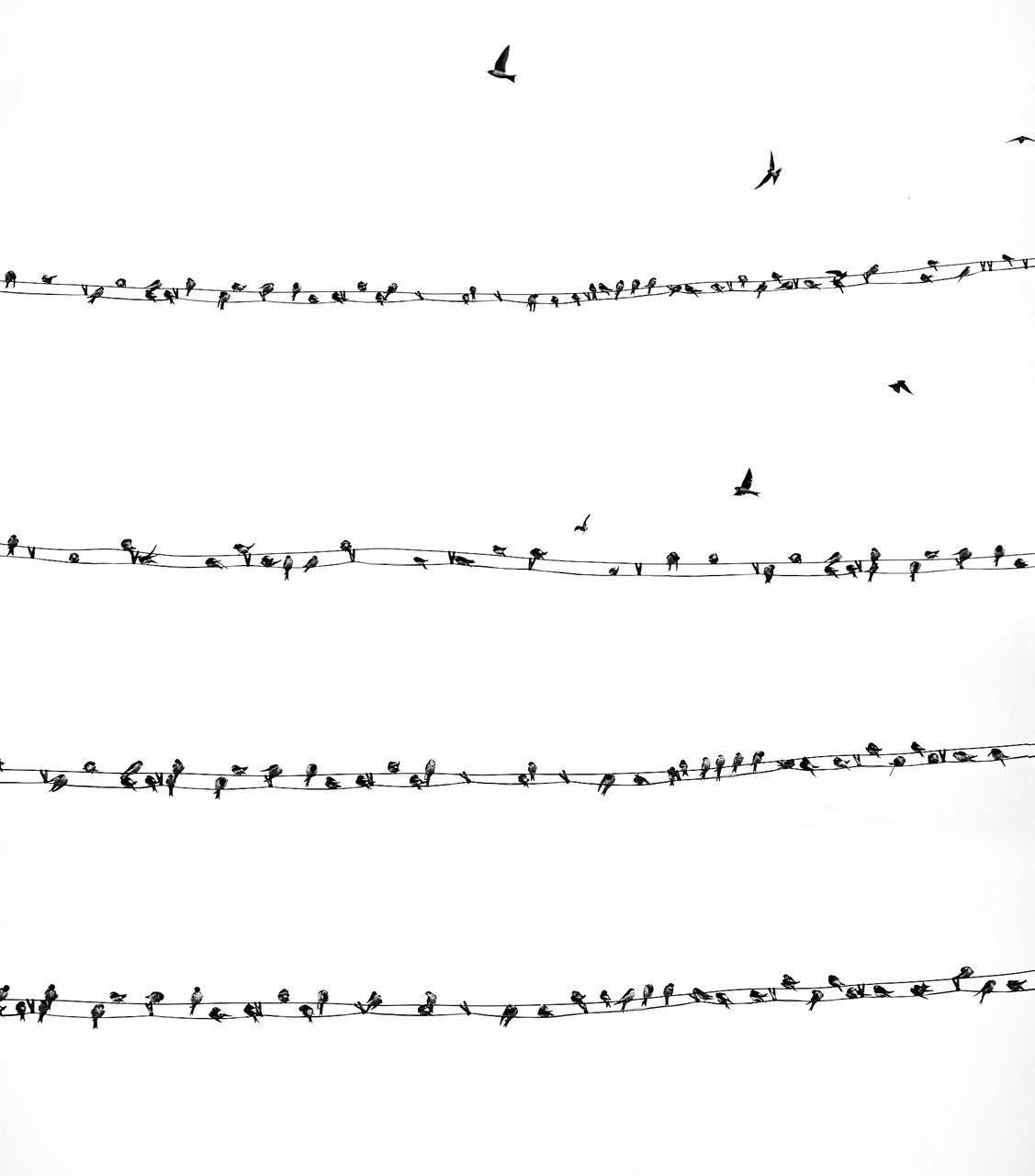 Eсенни ноти и песни от Станимира Шивачева - мирка