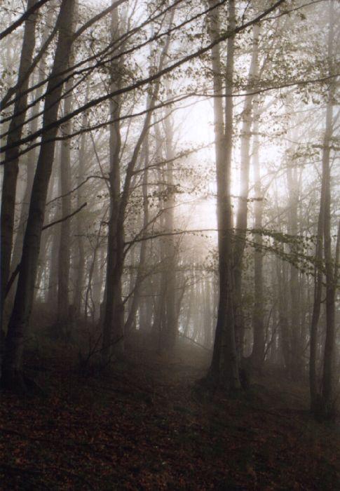 Мълчаната гора II | Author Стефан Стефанов - Стефан | PHOTO FORUM