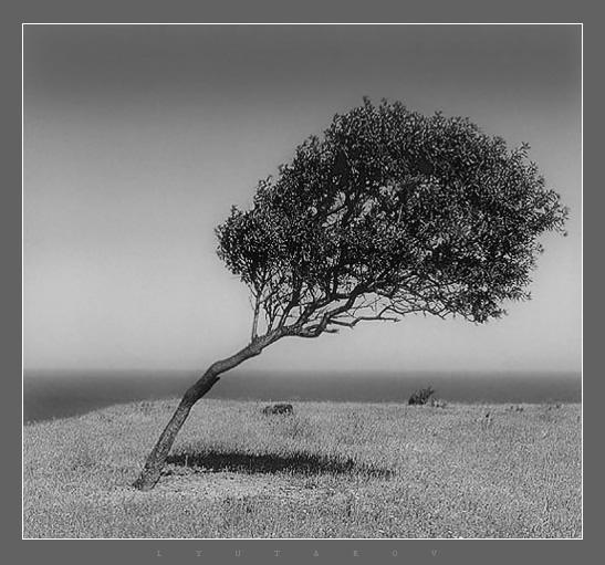 The tree of life | Author Simeon Lyutakov - Simon | PHOTO FORUM